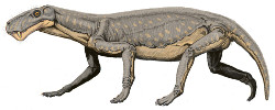 (image) Lycaenops