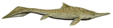 (image) Mixosaurus