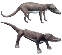 (image) Pakicetus and Ambulocetus